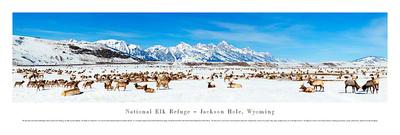 National Elk Refuge - Jackson Hole, Wyoming Posters by James Blakeway