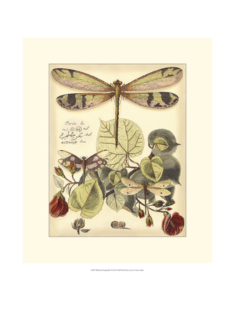 Whimsical Dragonflies II Print by  Vision Studio