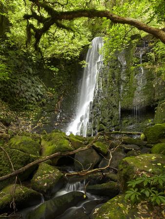Matai Falls, Catlins, South Otago, South Island, New Zealand Photographic Print by David Wall