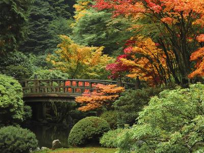 Moon Bridge in Autumn: Portland Japanese Garden, Portland, Oregon, USA Photographic Print by Michel Hersen