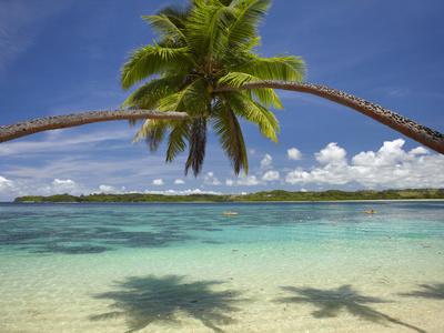 Palm Trees, Shangri-La Fijian Resort, Yanuca Island, Coral Coast, Viti Levu, Fiji, South Pacific Photographic Print by David Wall