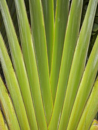 Palm Frond Pattern, Coral Coast, Viti Levu, Fiji, South Pacific Photographic Print by David Wall