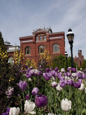 Tulips at the Smithsonian, Washington DC, USA, District of Columbia Photographic Print by Lee Foster