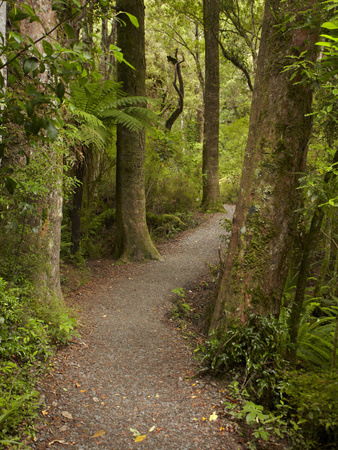 Track to Purakaunui Falls, Catlins, South Otago, South Island, New Zealand Photographic Print by David Wall