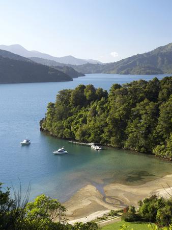 Whenuanui, Becks Bay, Marlborough Sounds, South Island, New Zealand Photographic Print by David Wall