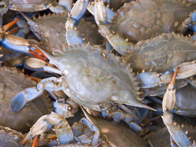 Blue Crabs, Maine Avenue Fish Market, Washington DC, USA, District of Columbia Photographic Print by Lee Foster