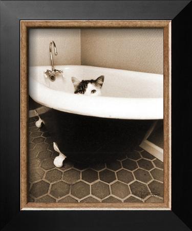 Kitty III Prints by Jim Dratfield