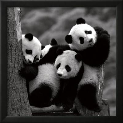 Pandas Art by Danita Delimont