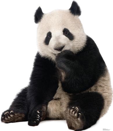 Giant Panda Lifesize Standup Cardboard Cutouts