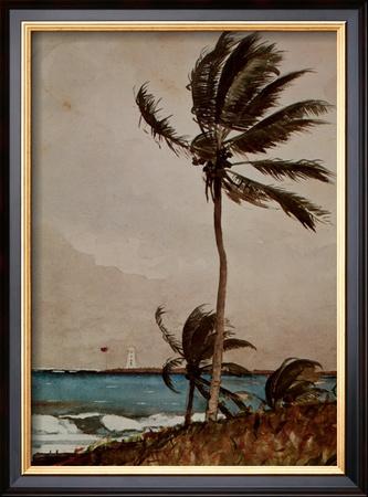 Palm Tree, Nassau Prints by Winslow Homer