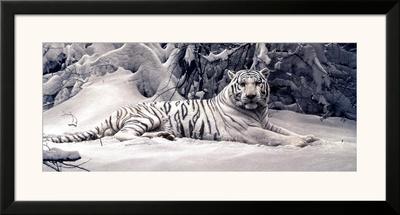 White Tiger Prints by Daniel Smith