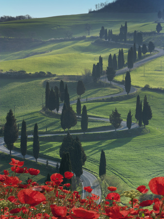 Winding Road and Poppies, Montichiello, Tuscany, Italy, Europe Photographic Print by Angelo Cavalli