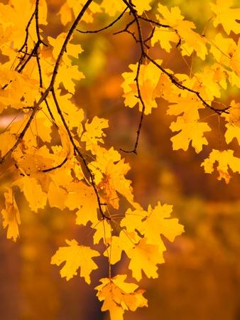 Orange Leaves Lámina fotográfica por Art Wolfe