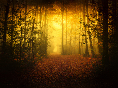 Morning Forest Photographic Print by Philippe Manguin