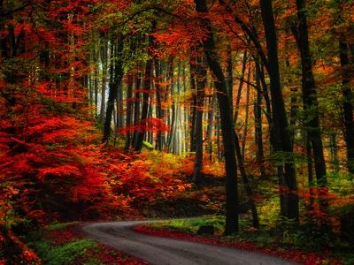 Colorful Way Fotografie-Druck von Philippe Sainte-Laudy