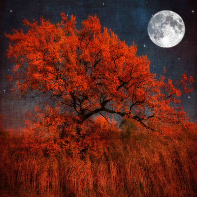 Red orange tree and water reflection with luna moon in background, night abstract nature autumn fall colors photography