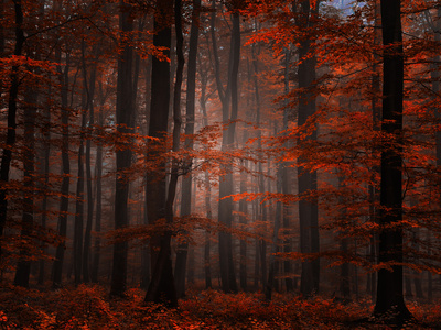 Bosque espiritual Lámina fotográfica por Philippe Sainte-Laudy