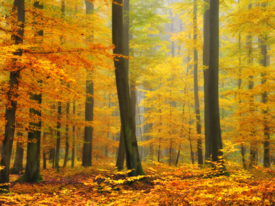 Yellow orange leaves and trees forest autumn fall landscape photograph