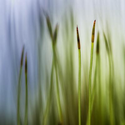 Moss Photographic Print by Ursula Abresch