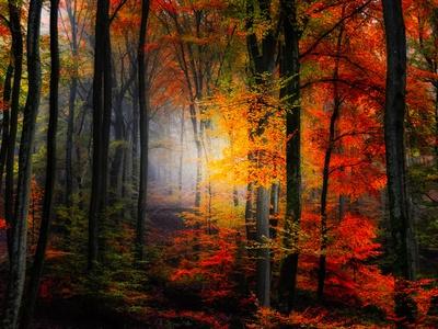 Colores de luz Lámina fotográfica por Philippe Sainte-Laudy