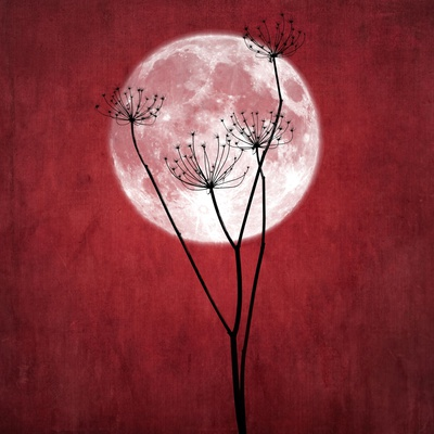 Give Me the Moon Photographic Print by Philippe Sainte-Laudy
