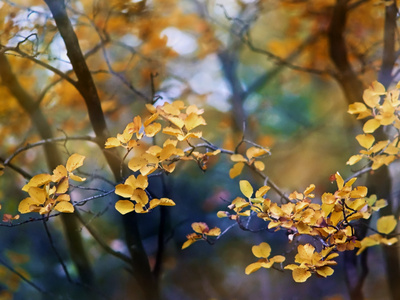 Hojas muertas Lámina fotográfica por Ursula Abresch
