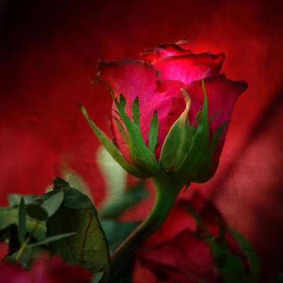 Red on Red Photographic Print by Philippe Sainte-Laudy