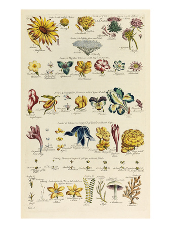 Plate 13 Giclee Print by John Hill