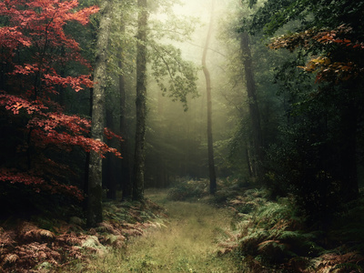 Legendary Forest in Brittany Photographic Print by Philippe Manguin