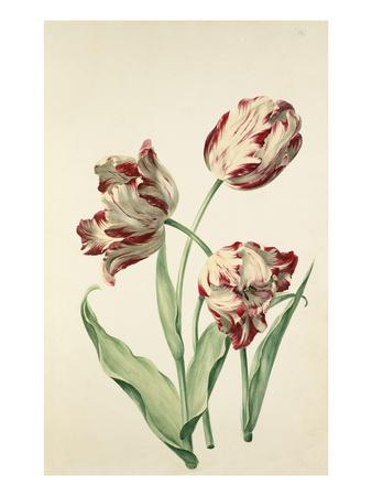 Plate 12 Premium Giclee Print by August Wilhelm Sievert