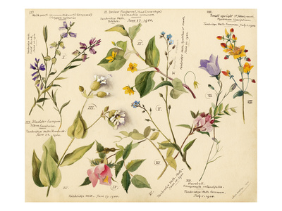 Wild flowers composite Premium Giclee Print by Lilian Snelling