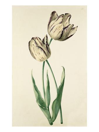 Plate 22 Premium Giclee Print by August Wilhelm Sievert