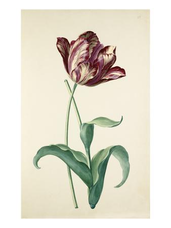 Plate 20 Premium Giclee Print by August Wilhelm Sievert