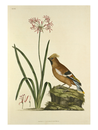 Tab VIII Premium Giclee Print by John Frederick Miller