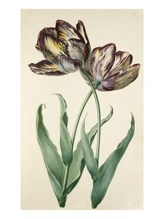 Plate 13 Premium Giclee Print by August Wilhelm Sievert
