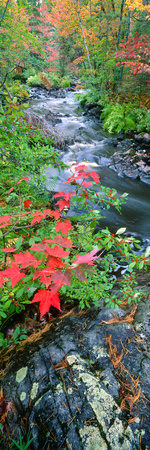 River Flowing Through a Forest, Black River, Upper Peninsula, Michigan, USA Photographic Print by  Panoramic Images