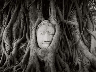 Buddha Head in the Roots of a Tree, Wat Mahathat, Ayutthaya Historical Park, Ayutthaya, Thailand Photographic Print by  Panoramic Images