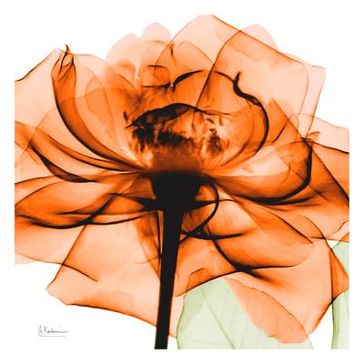 Orange Rose Art by Albert Koetsier