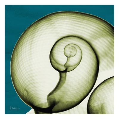 Moon Snail Poster by Albert Koetsier