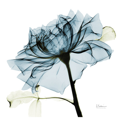 Blue Rose 2 Poster von Albert Koetsier