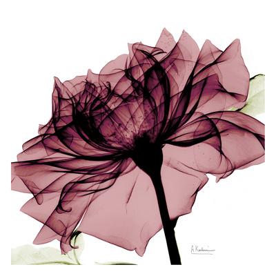 Chianti Rose Poster von Albert Koetsier