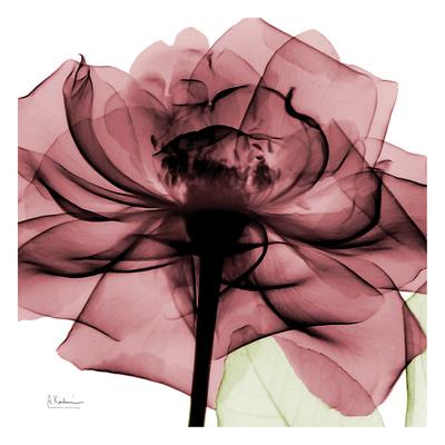 Chianti Rose Prints by Albert Koetsier
