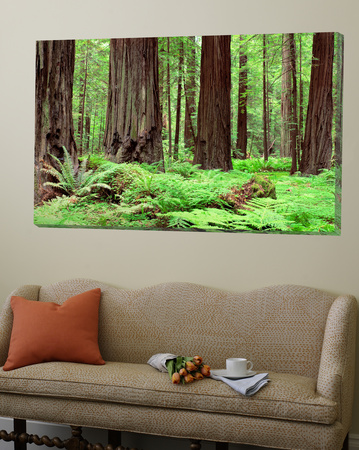 Trail, Avenue of the Giants, Founders Grove, California, USA Posters