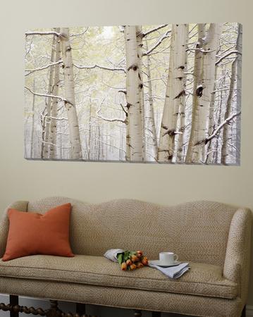 Autumn Aspens with Snow, Colorado, USA Poster