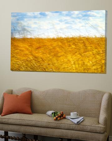Golden Grass in the Wind Prints by Robert Cattan