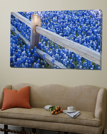 Bluebonnets Along Fenceline Posters by Terry Eggers
