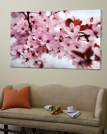 Japanese Cherry Blossom Posters by Kai Schwabe