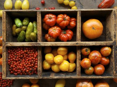 Tomato Varieties at the Seed Savers Exchange Fotoprint av Jim Richardson