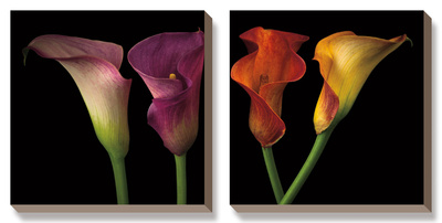 Jewel Calla Lilies Art by Assaf Frank