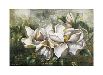 Dawning Magnolias Giclee Print by  Meng
